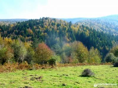 Selva Irati-Pirineo Navarro-Puente del Pilar; alimentación para senderismo como empezar a hacer sen